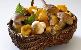 Что происходит при отравлении грибами