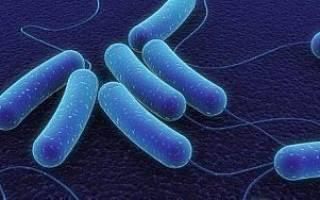 Симптомы сальмонеллеза: признаки и причины осложнений
