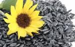 Семечки подсолнуха — польза и вред: жареные, сырые, для мужчин, для женщин, калорийность