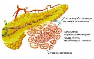 Поджелудочная железа гистология: гистологическое строение поджелудочной железы