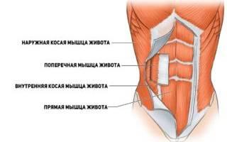 Тянет мышцы внизу живота