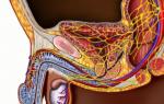 Сосудистая импотенция: причины, симптомы, диагностика, лечение