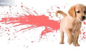 Почему у щенка понос с кровью